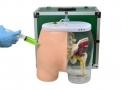 Simulador de Injeção Intramuscular no Glúteo e Visualização Óssea, Muscular e Nervosa Sdorf