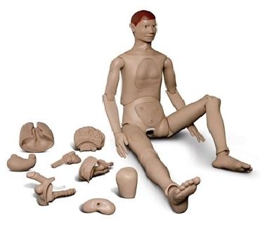 Manequim de Enfermagem Adulto com Órgãos Internos - 52A