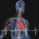 Eletrocardiogramas de Repouso e de Esforço Teste Ergométrico - Cardiofit