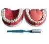 imagem de Arcada dentária com todos os dentes removíveis TZJ-312B - Anatomic
