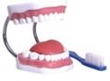 imagem de Arcada dentária TGD 0312 B - Anatomic