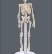 Esqueleto humano 20cm