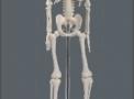 imagem de Esqueleto Humano 45cm