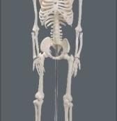 esqueleto humano 85cm