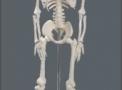 imagem de esqueleto humano 85cm