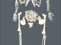 imagem de Esqueleto humano desarticulado