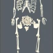 Esqueleto 168cm Desarticulado TGD-0101-C