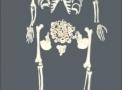 imagem de Esqueleto 168cm Desarticulado TGD-0101-C