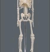 Esqueleto 45 cm TGD-0121