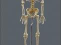 imagem de Esqueleto 168 cm flexível c/ suporte TGD-0101-B