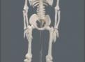 imagem de Esqueleto 85 cm TGD-0112