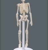 Esqueleto 20 cm (mini esqueleto) TGD-0131