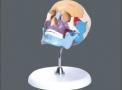 imagem de Crânio Didático colorido TGD-0102-A
