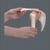 Articulação Ombro TGD-0160-C