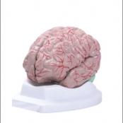 Cérebro c/ 8 partes