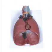 Sistema Respiratório c/ 7 partes (Pulmao luxo)