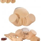 Simulador de parto c/ cervix / epsotomia e feto c/ placenta