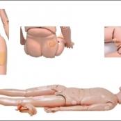 Modelo de Manequim Bissexual com órgãos internos em Resina Emborrachada