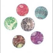 Lâminas ensino Fundamental - Biologia  25 espécies