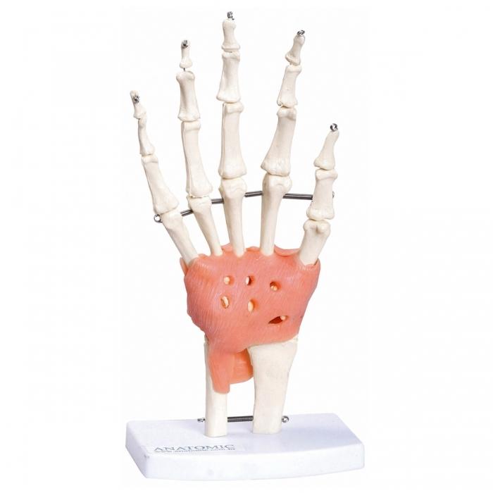 Articulação da Mão TGD-0162 C