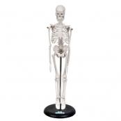 Esqueleto Humano de 45 cm com Suporte Sdorf